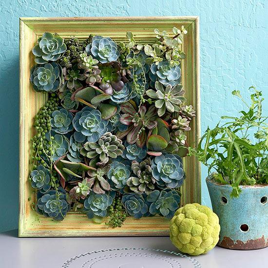 jardines verticales caseros - cuadro de suculentas