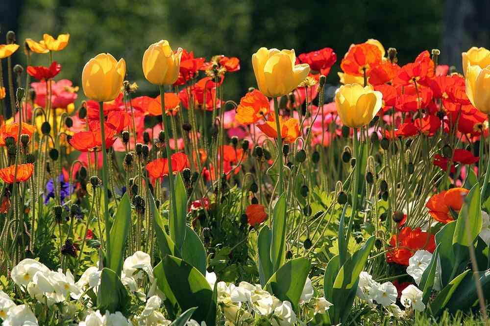 jardin en primavera flickr univ. de navarra