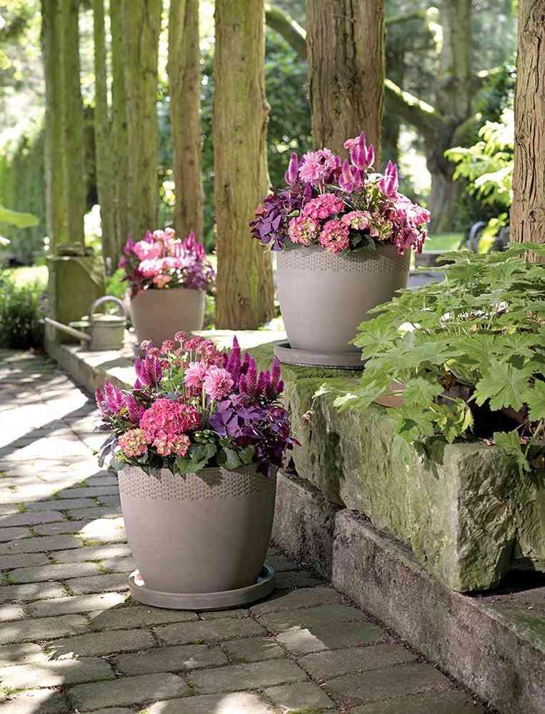 jardin en primavera macetas flores de color rosa