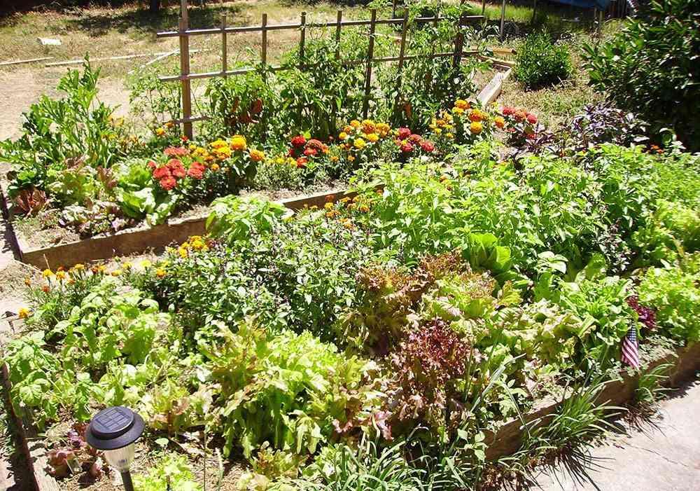 un huerto en tu jardín