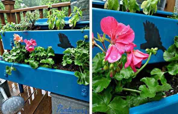 muebles con color jardinera flor rosa