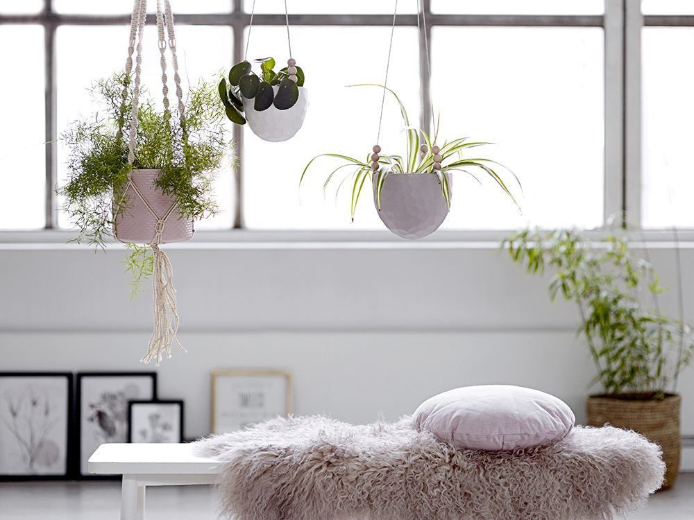 ideas para decorar con plantas de interior