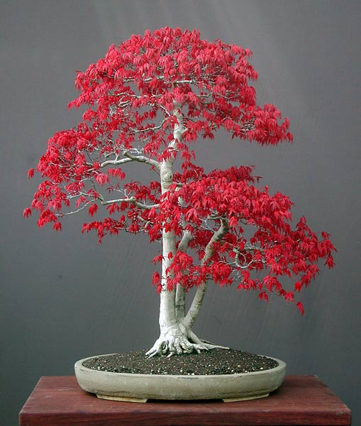 Fuente: Art of Bonsai