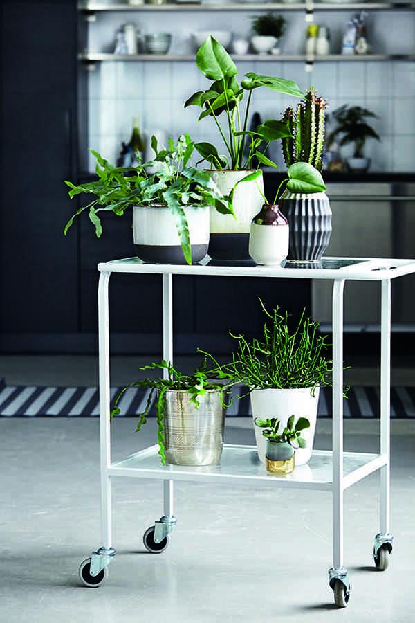 decorar con plantas housedoctor carrito