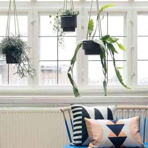 ferm ambiente plantas