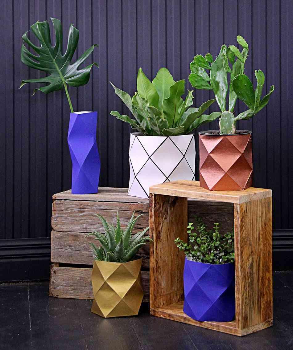 plantas de interior CranmoreHome grupo