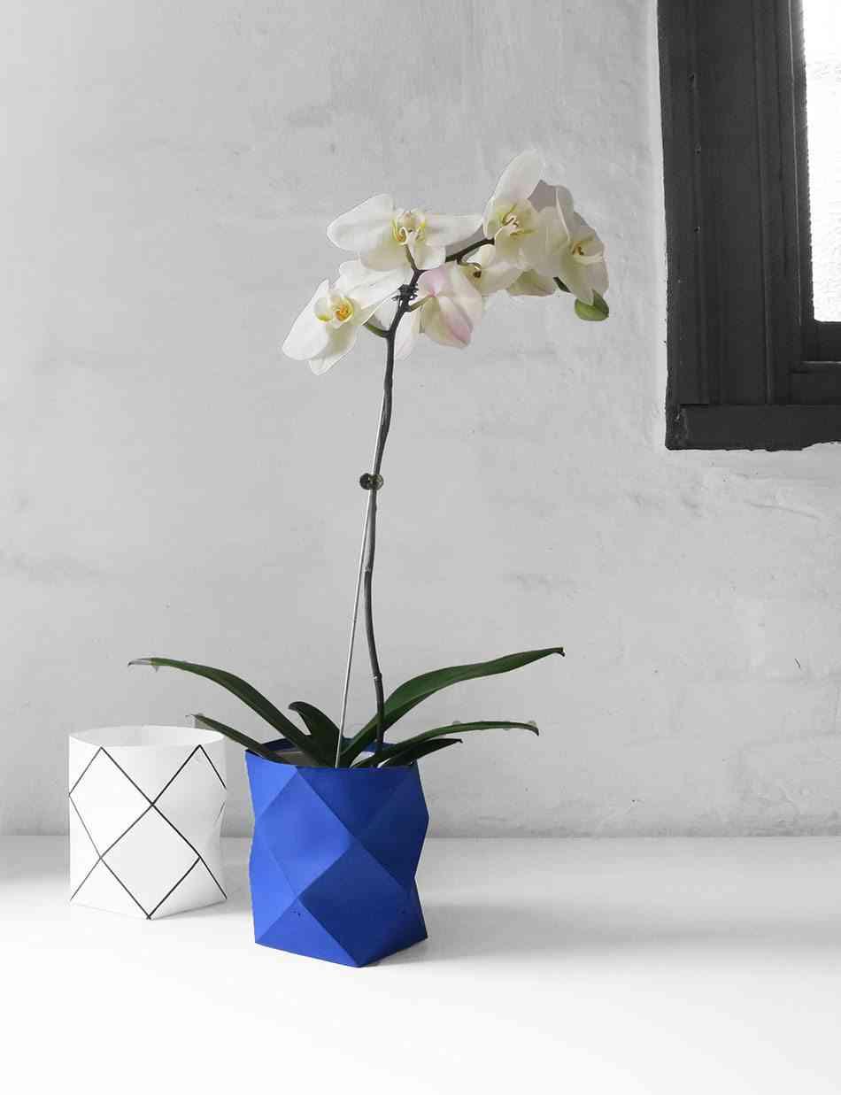 plantas de interior CranmoreHome orquidea