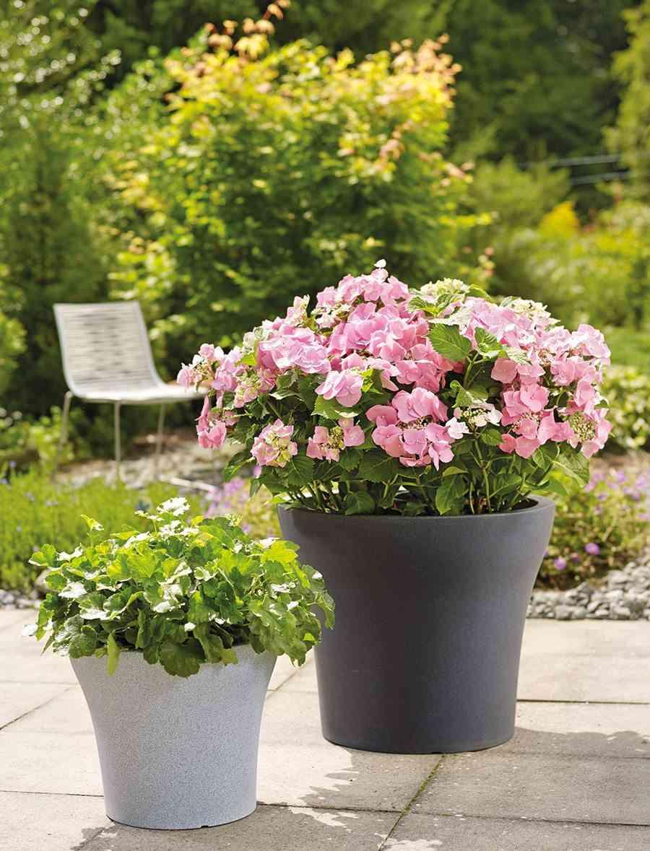 jardin en otono design3000