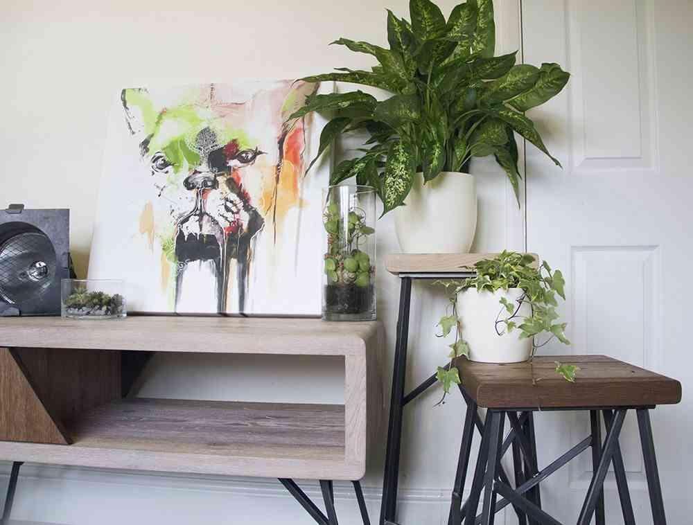 Claves para que tus plantas de interior est n sanas y bonitas - Decoracion plantas interior ...