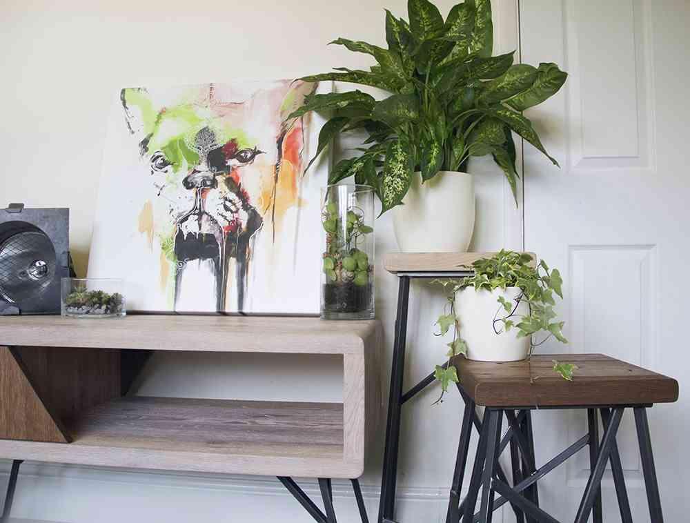 Claves para que tus plantas de interior est n sanas y bonitas for Casas decoradas con plantas naturales