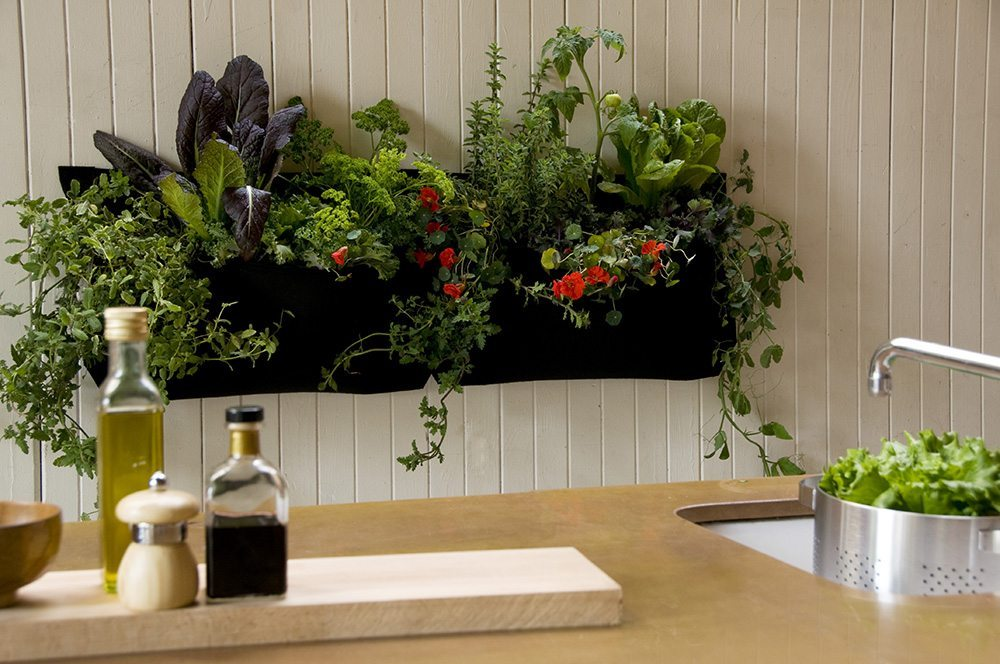 plantas de interior Wally Kitchen