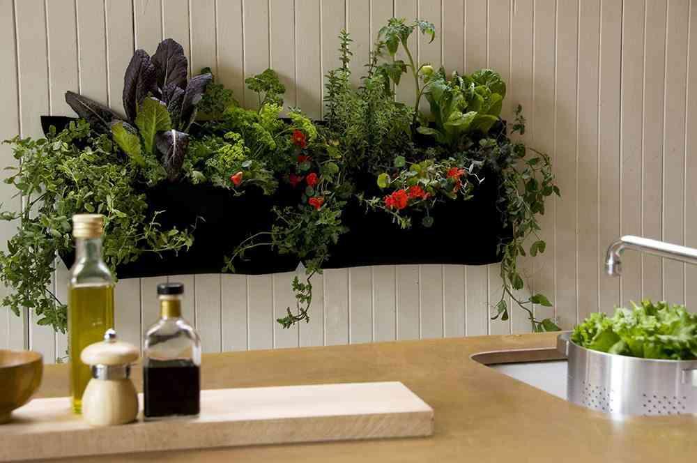 plantas de interior Wally Kitchen