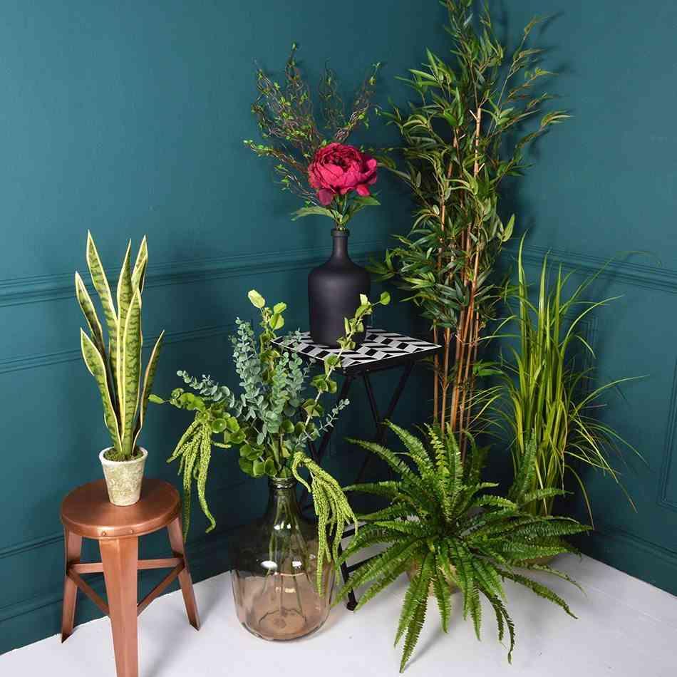 plantas de interior MiaFleur conjunto