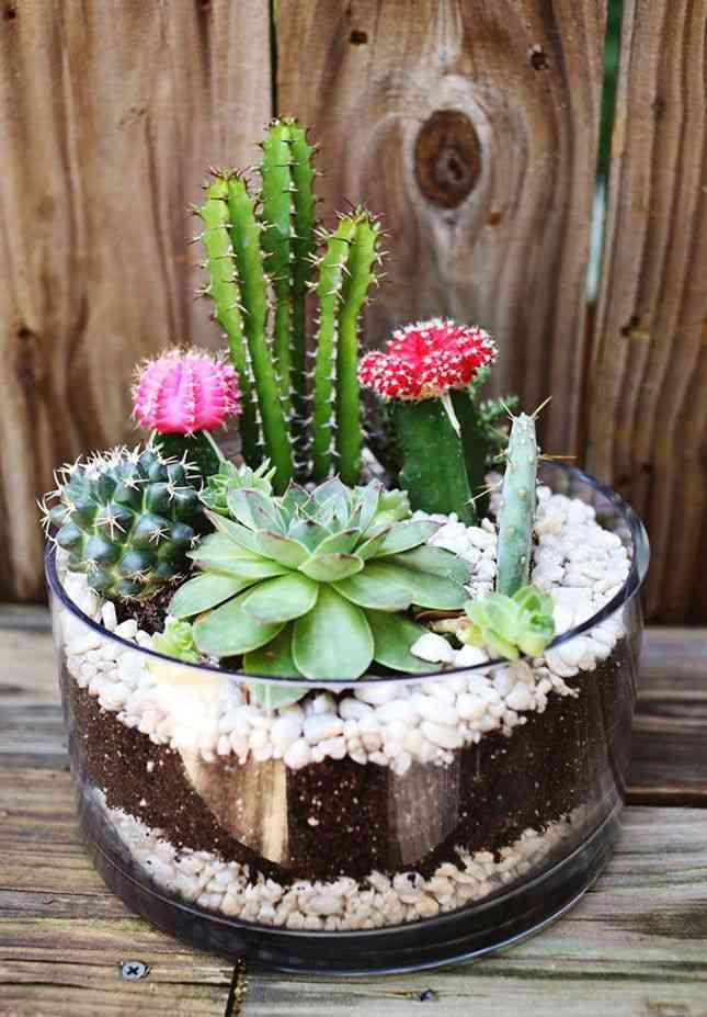 Jardines en miniatura plano