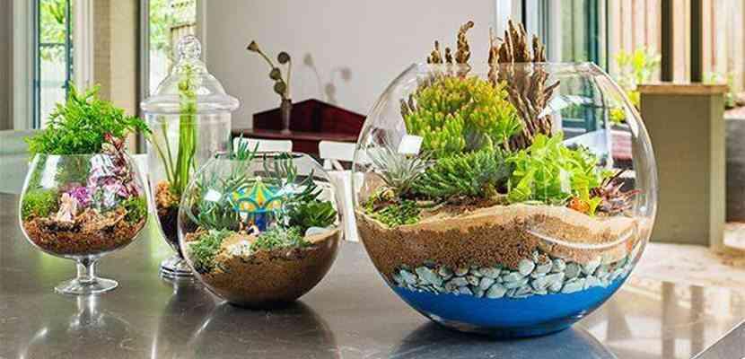 Terrarios los jardines en miniatura que todos podemos tener for Jardines en miniatura