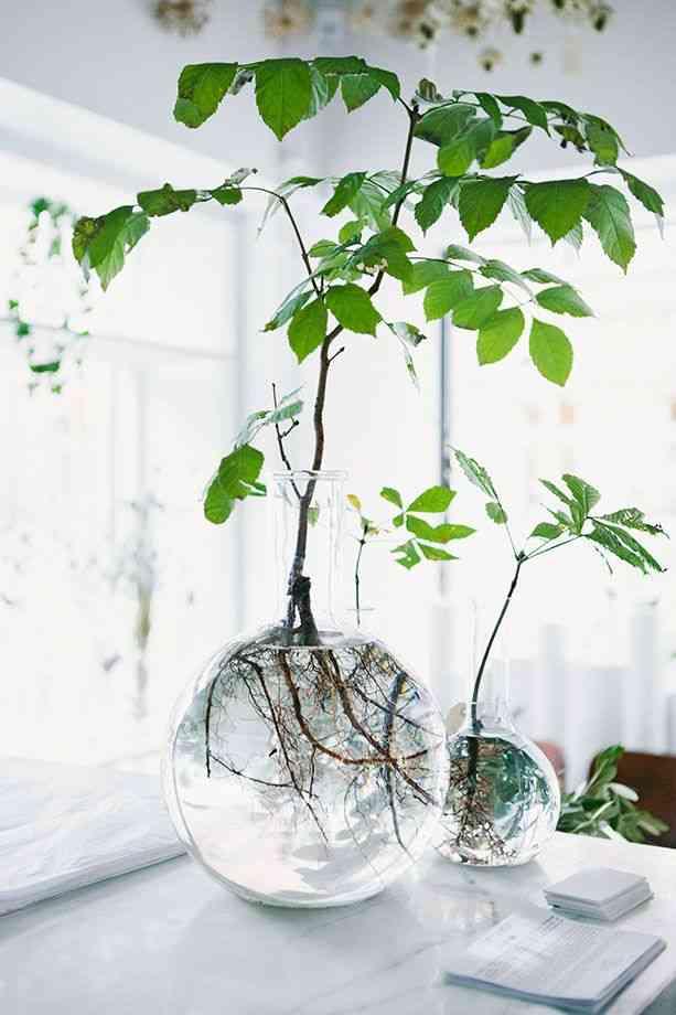 Macetas con peceras - decorar con flores y plantas
