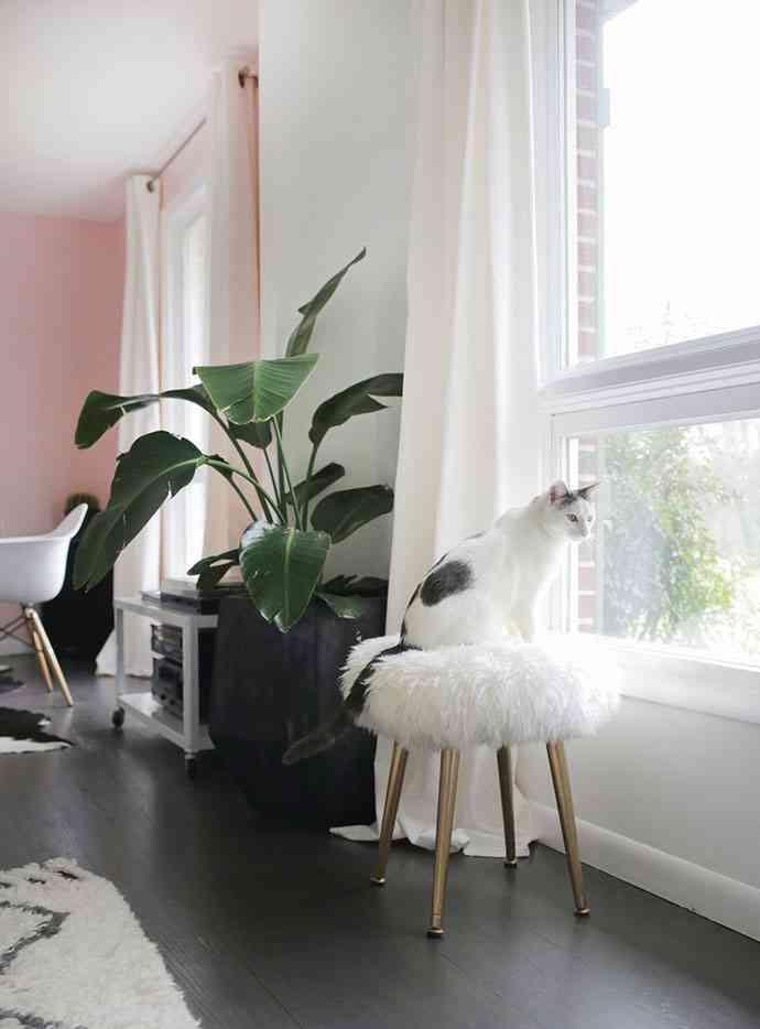 como hacer un taburete foto gato