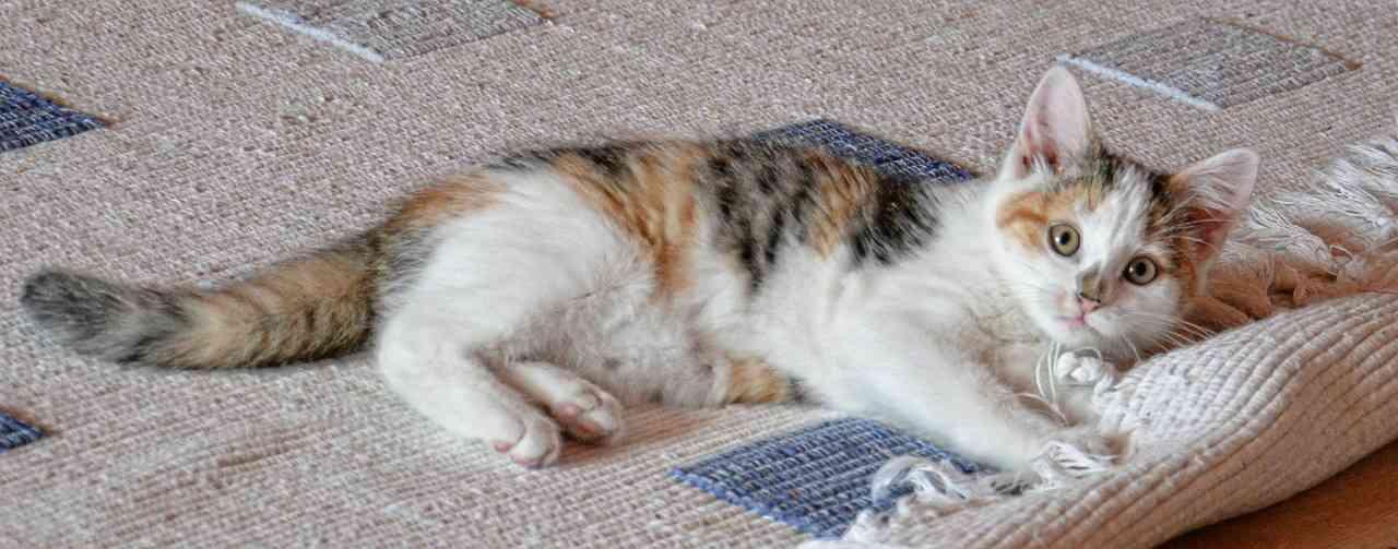 trucos para cuidar tus alfombras