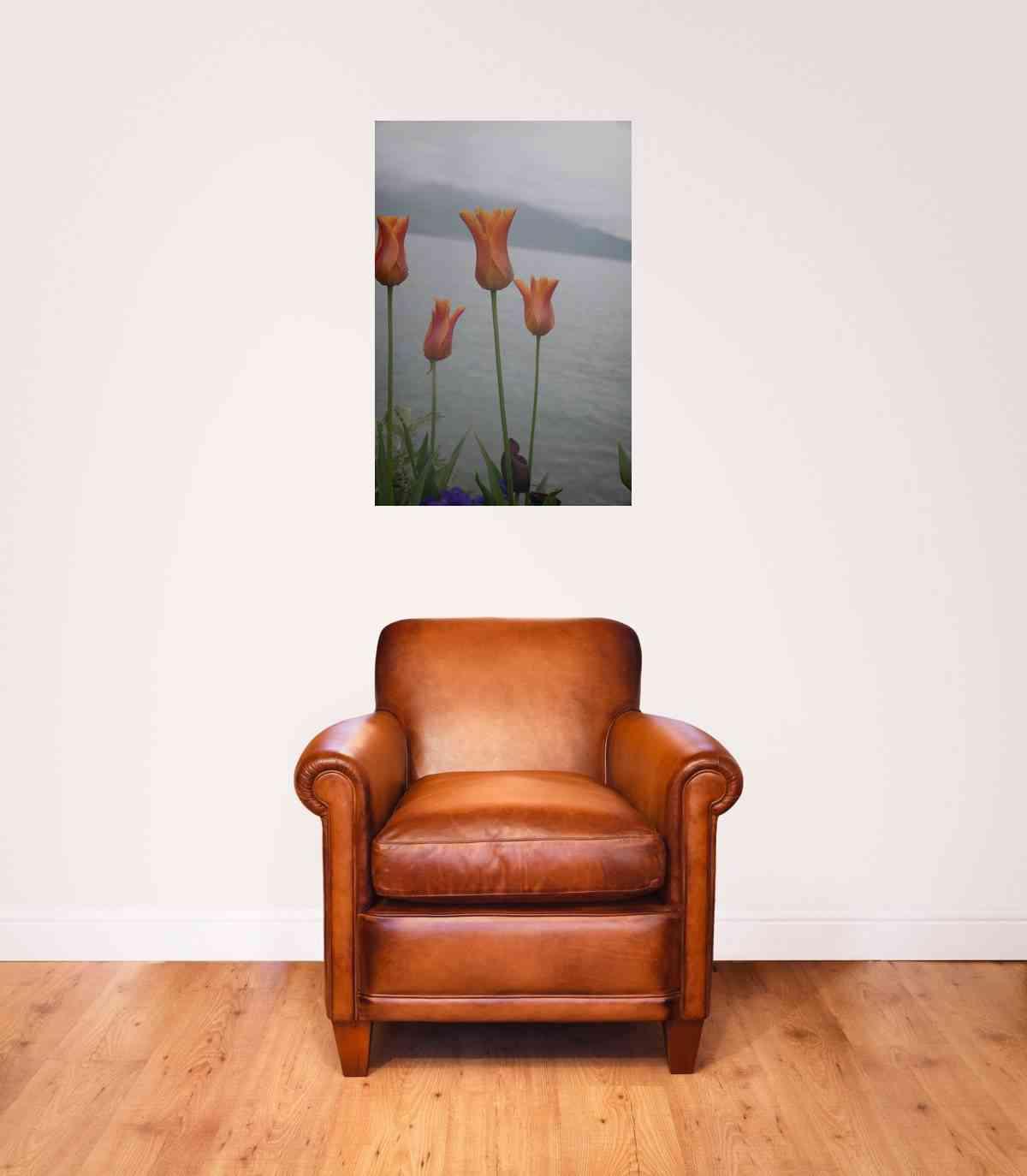 Cuadros de fotografías - cuadro de aluminio tulipanes en Suiza