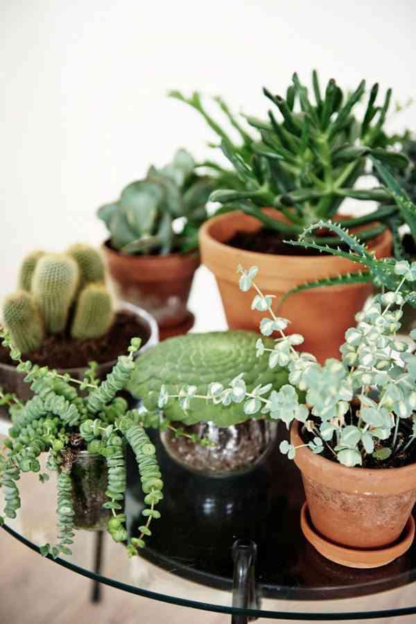 granja rehabilitada plantas