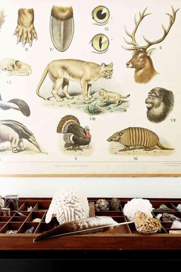 granja rehabilitada tesoros fosiles