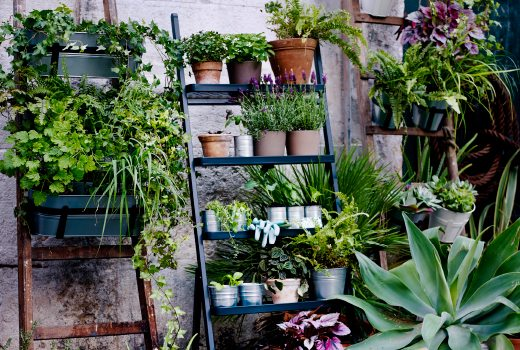 5 ideas para plantear y decorar jardines peque os for Deco jardin pequeno