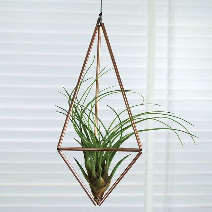 Ideas para decorar tu casa con plantas de aire for Plantas de aire