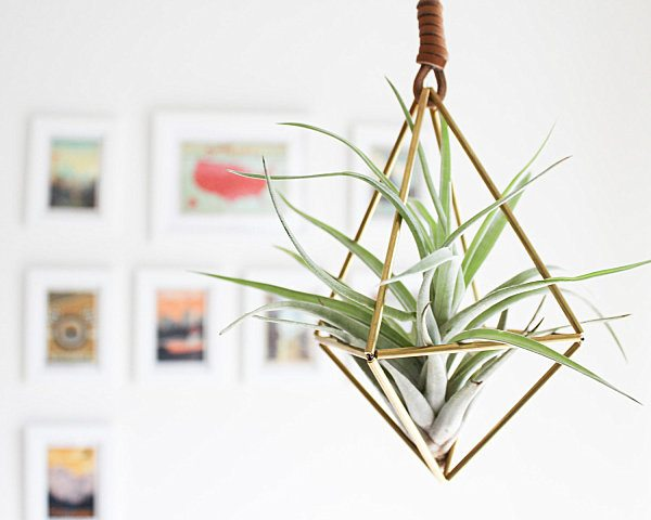 plantas de aire palmers colgante