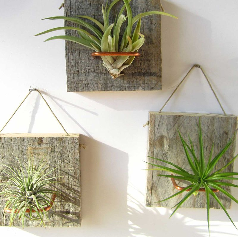 plantas de aire palmers pared