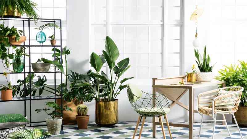 6 plantas de interior resistentes al fr o y al calor for Flores para interiores con poca luz