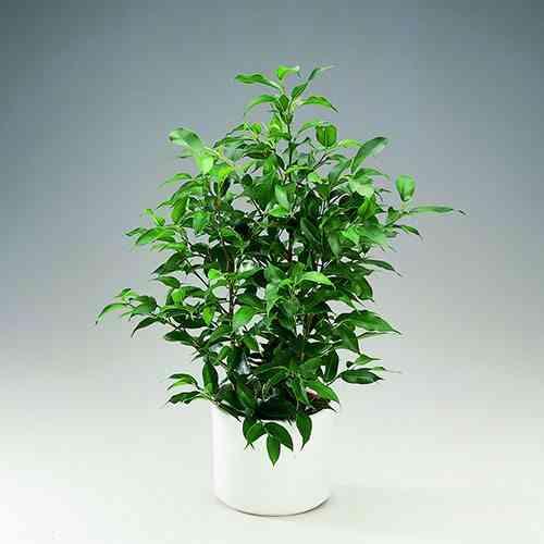 6 plantas de interior resistentes al fr o y al calor - Plantas exterior resistentes ...