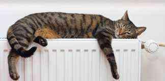 Calor confortable para nuestro hogar y para nuestras mascotas y gatos