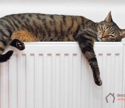 Comfortable heat for our home and for our pets and cats