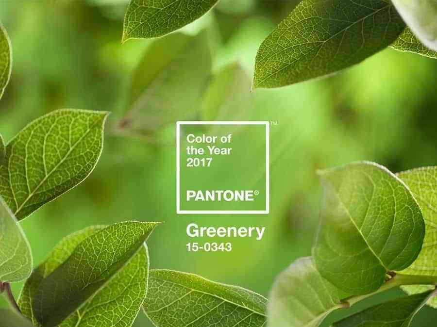 color del 2017 pantone hojas