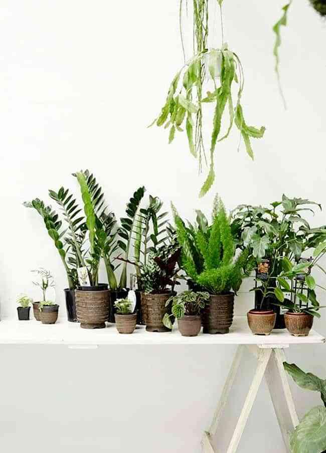 191 Sabes Cu 225 L Es El Mejor Sitio Para Colocar Tus Plantas En