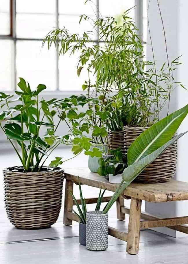 Descubra los mejores lugares para colocar plantas en casa - iFreses