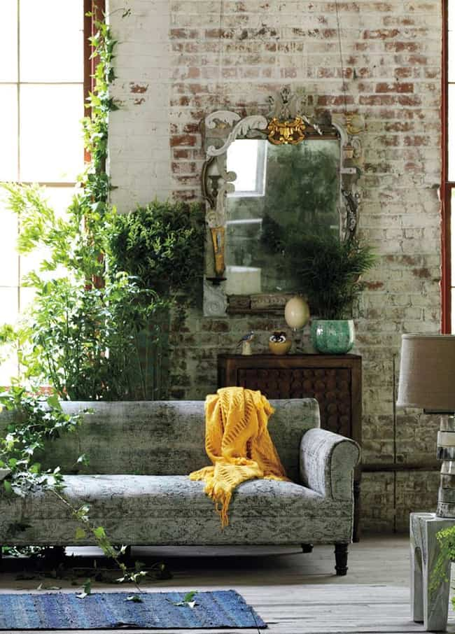 plantas en casa bodie