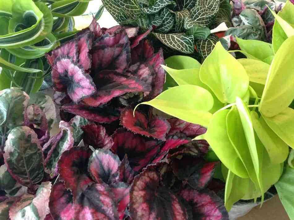 plantas exoticas donna