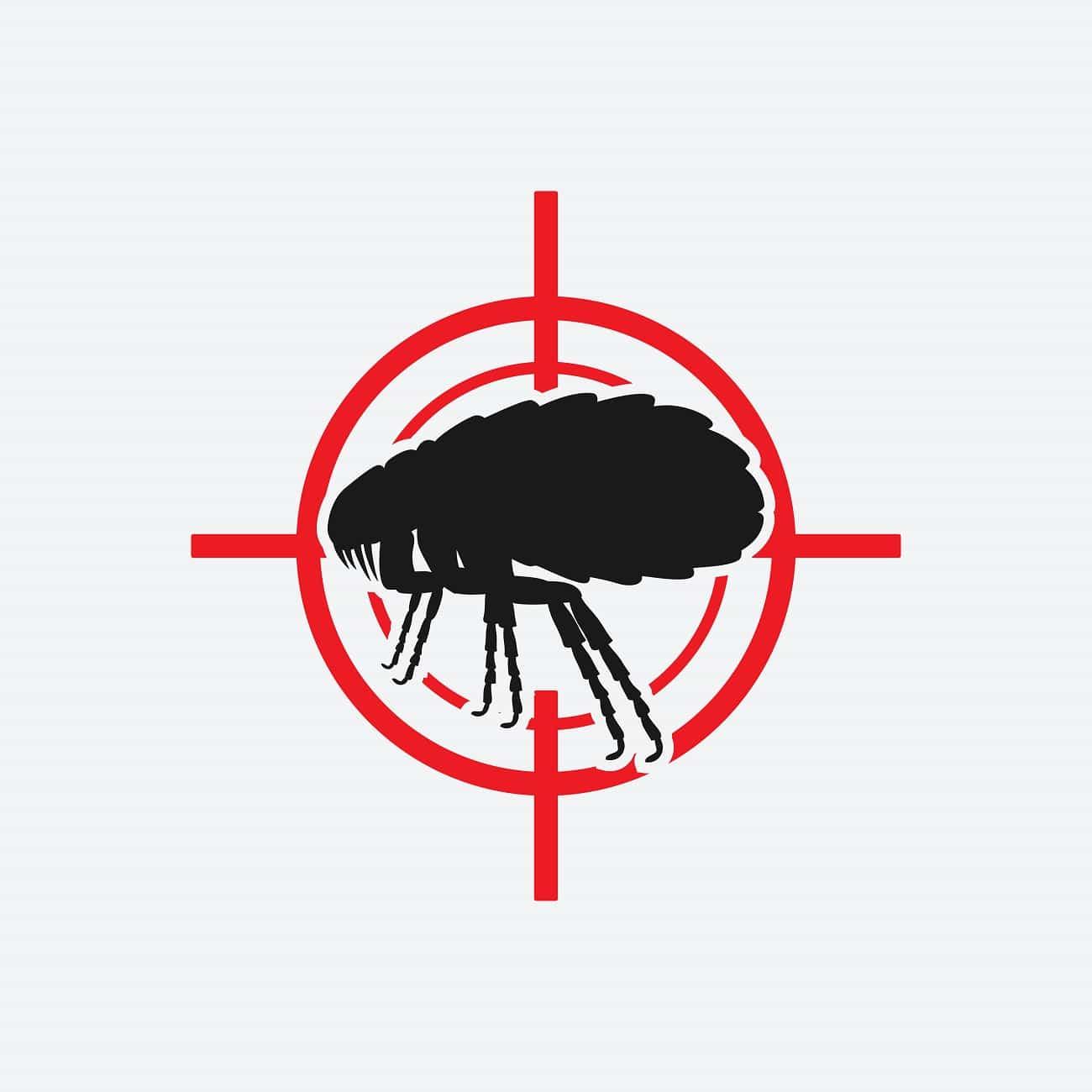 C mo erradicar pulgas en casa m todos sencillos y eficaces - Como erradicar las pulgas ...