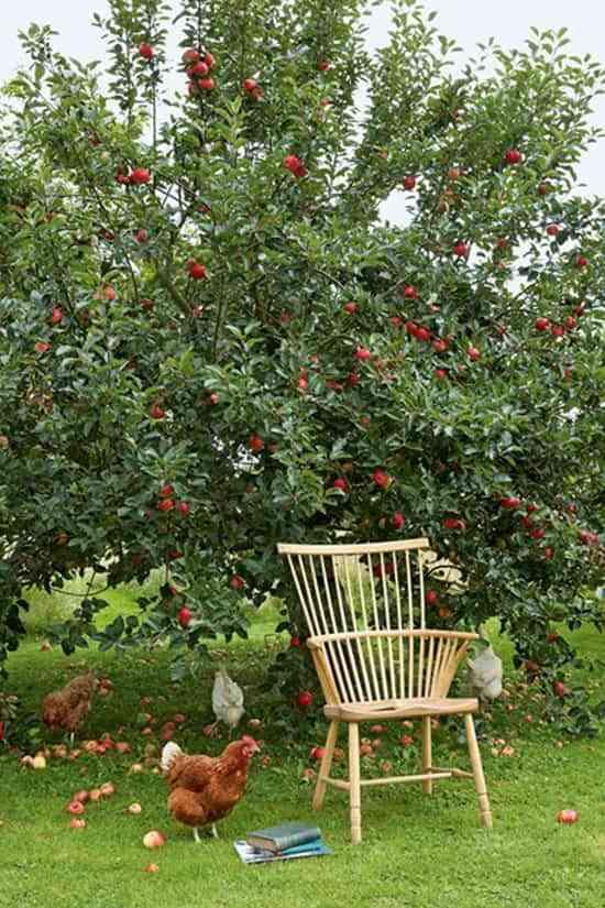 Las tareas fundamentales que tienes que hacer en el jardín en octubre