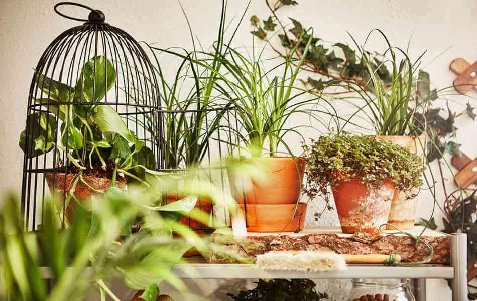 Ideas prácticas y decorativas para colocar las plantas en el balcón