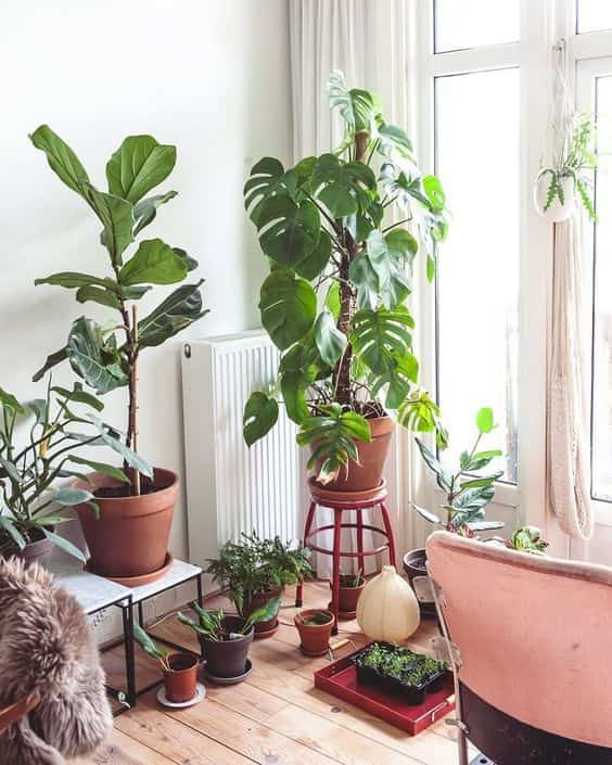 take care of indoor plants at home II