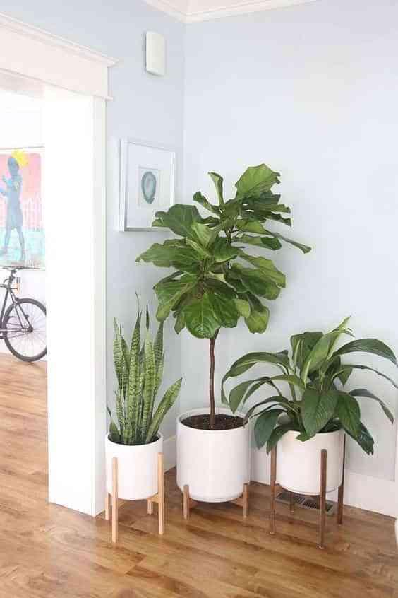 take care of indoor plants III