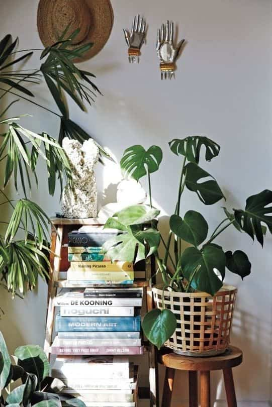 take care of indoor plants IV