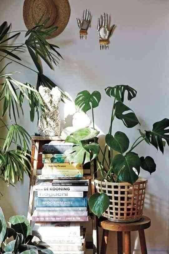 cuidar plantas de interior IV