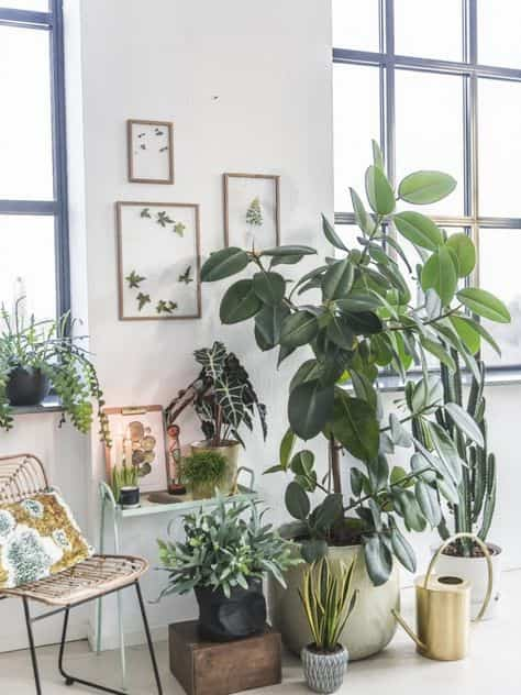 take care of indoor plants IX