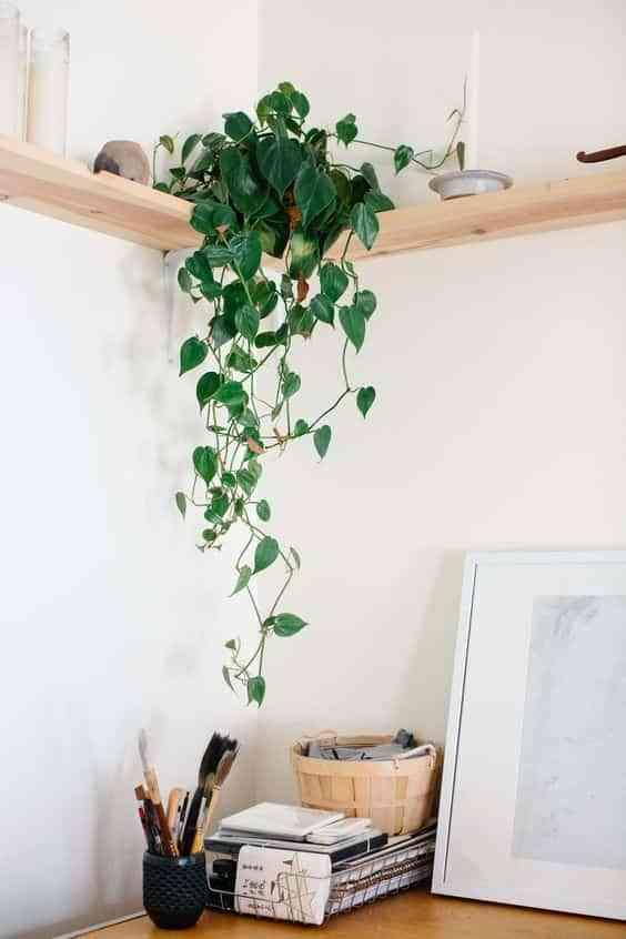 take care of indoor plants V