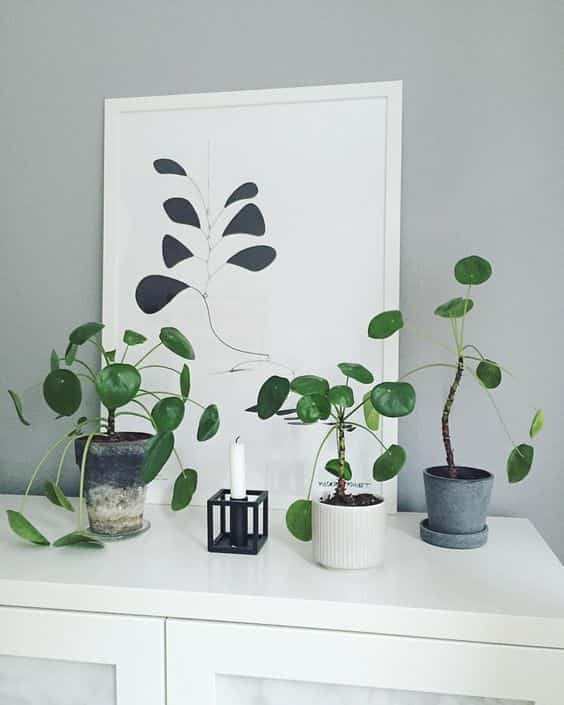 take care of indoor plants VI