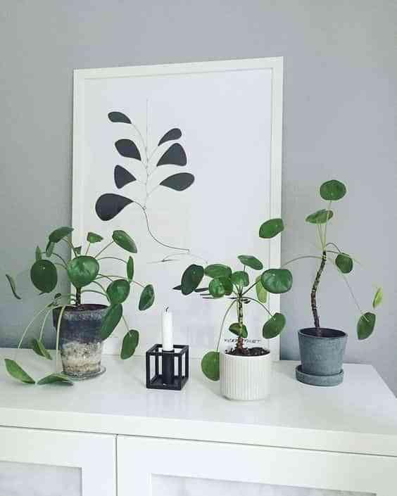 cuidar plantas de interior VI