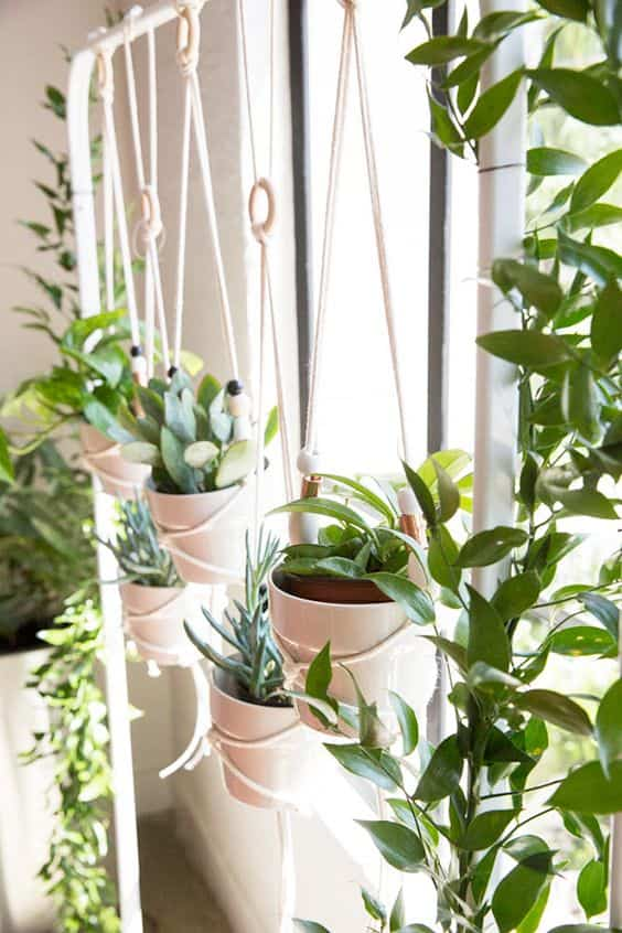 take care of indoor plants X